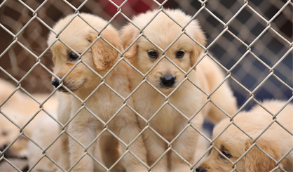 Dog lovers duped into buying illegal pups