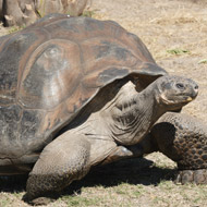 Tortoise study highlights need to conserve parasites