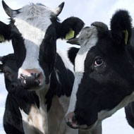 Bristol to host sustainable livestock conference
