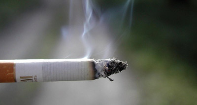 Smokers urged to protect pets from passive smoking