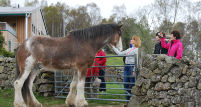 Enormous rescue horse fronts charity campaign