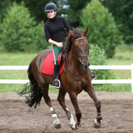 Experts discuss horse and rider weight proportions