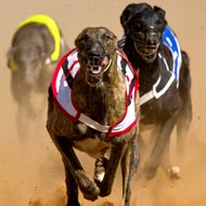 MPs to visit greyhound track