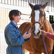 Equine practice: the importance of health and safety