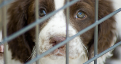 Rise in dog imports prompts concern