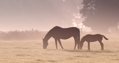 Herpes virus discovered at National Stud