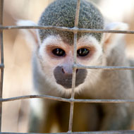 Vets pledge to make 2016 a lucky year for primates
