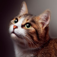 MPs launch animal welfare inquiry