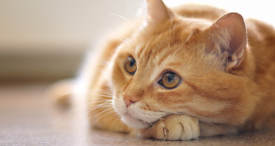 Study offers insights into treatment of FIP