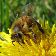 Not all neonicotinoids are the same, study finds