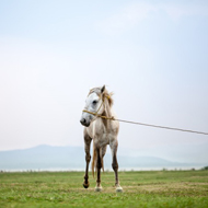 Pilot ban on horse tethering recommended