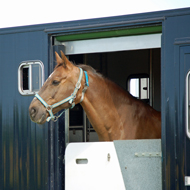 One in five horse box injuries fatal, data shows