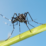 Zika virus may spread to Europe