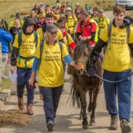 Dartmoor ponies help students complete Ten Tors challenge