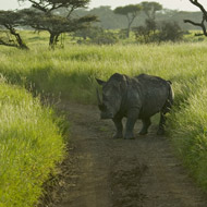 Swaziland proposes to sell rhino horn