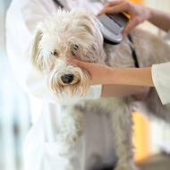 Risk of microchip problems 'likely to be very low'