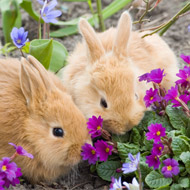 Sharp rise in rabbits looking for new homes