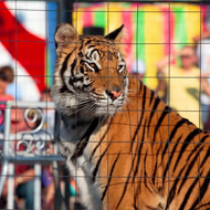Scotland plans to ban wild animals in circuses