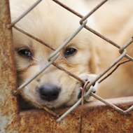 Annual dog meat festival begins in China