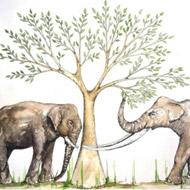 Tooth wear study reveals feeding habits of ancient elephants