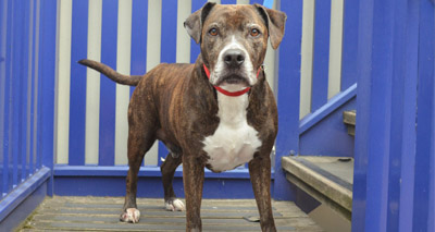 Calls to end BSL after new report