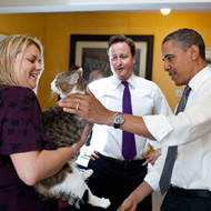 Chief mouser Larry to remain at No. 10