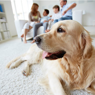 Dogs help families with autistic children, study finds