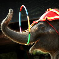 Review supports ban on wild animals in circuses
