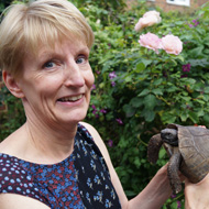 GPS tracking and thermal imaging used to find missing tortoise