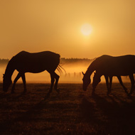New field test for African horse sickness