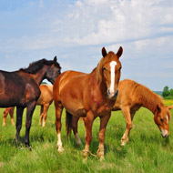 Study highlights increase in ageing equines