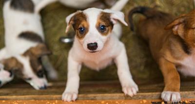 MCR-1 gene found in pets in China