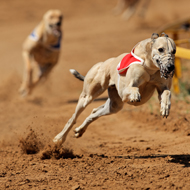 Greyhound review 'a missed opportunity'