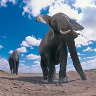 Environment secretary announces UK ban on ivory sales