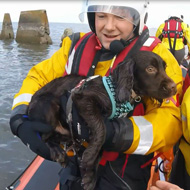 Dog owners warned about coastline dangers