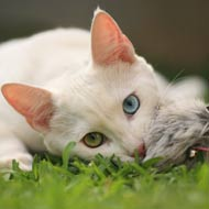 Academic claims cats are 'devastating' bird populations
