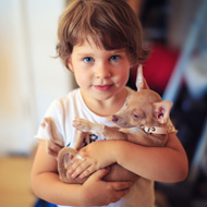 Children 'unaware of the danger of scared dogs'
