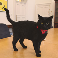 Treasury's chief mouser enlisted as a tour guide