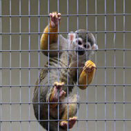 'Thousands' of primates kept as pets, charities say