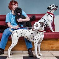 Glasgow vet recognised for work with homeless
