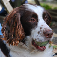 Fire investigation dog to receive special award