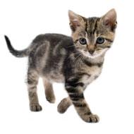 Kitten hijacks Turkish TV show