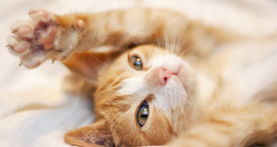 Cat's colour rated important in choosing a pet