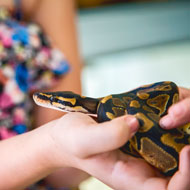 Disease risk from exotic pets is 'unpredictable'