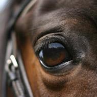Endurance horse tests positive for banned substance
