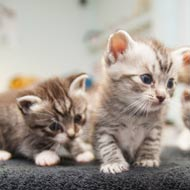 New campaign calls for action on cat breeding