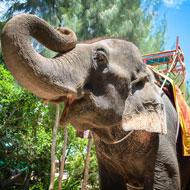 TripAdvisor to stop profiting from animal tourism