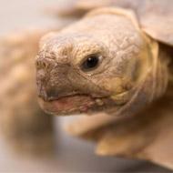 Tortoise owners urged to delay hibernation