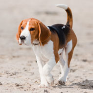 Rise in Dog Control Orders being issued