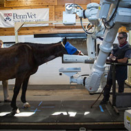 University pioneers robotic scan for horses